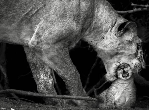 Sonalini Khetrapal / National Geographic