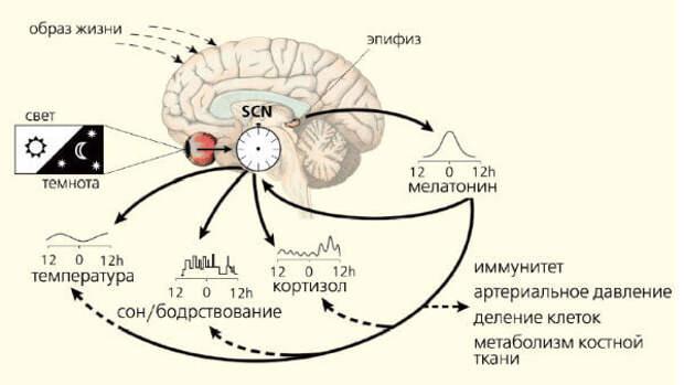 http://www.econet.ru/uploads/pictures/250284/content_gerontology_1__econet_ru.jpg