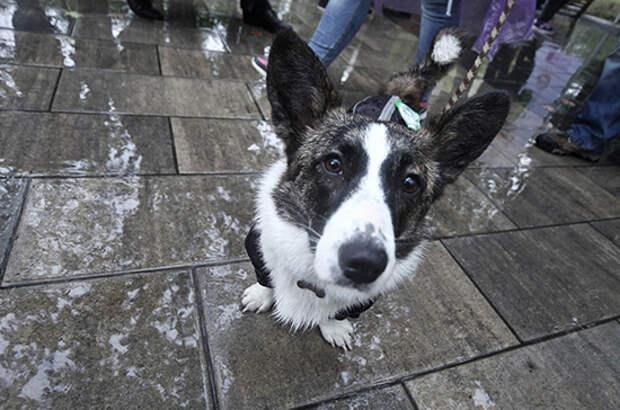 Изъятие домашних животных за долги могут запретить