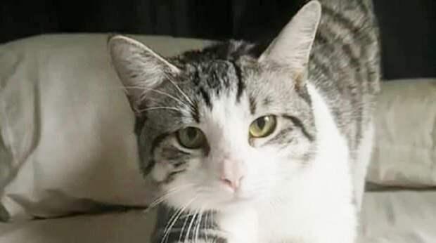 После перелета семья получила кошачью переноску, которая оказалась пустой