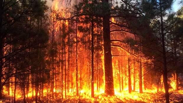 В Крыму второй день горит лес