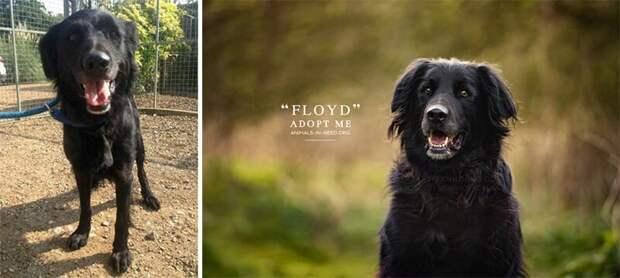 4. Флойд животные, помощь, портрет, приют, собака, фотограф, хозяин