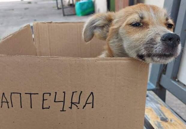 Женщина попросила помочь бездомному щенку, а ночью после клиники бросила его на улице
