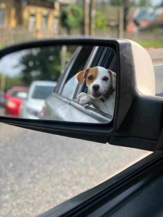 собака в отражении
