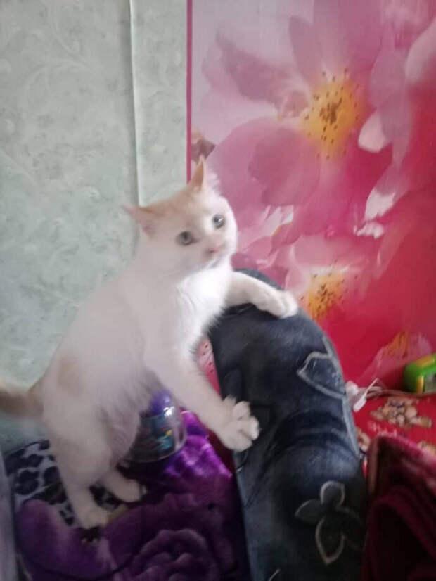 Дина заметила на остановке облезлого кота, и пообещала себе, что если он за 4 часа не уйдет, то возьмет. И кот её дождался