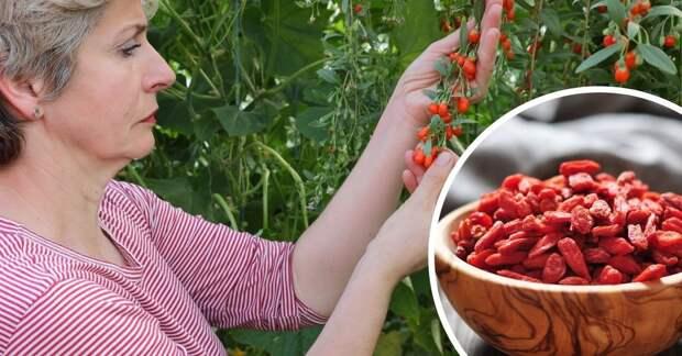 Правда ли, что ягоды годжи и барбарис — это одно и то же?