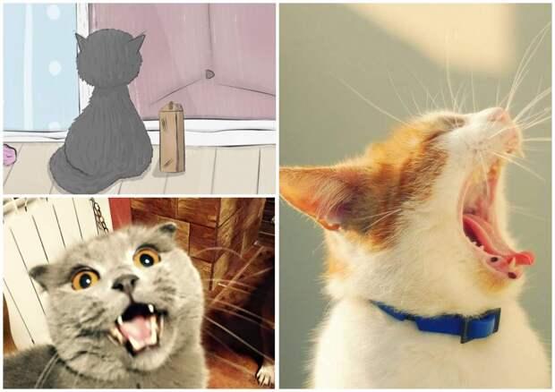 На фото изображены кричащие коты.