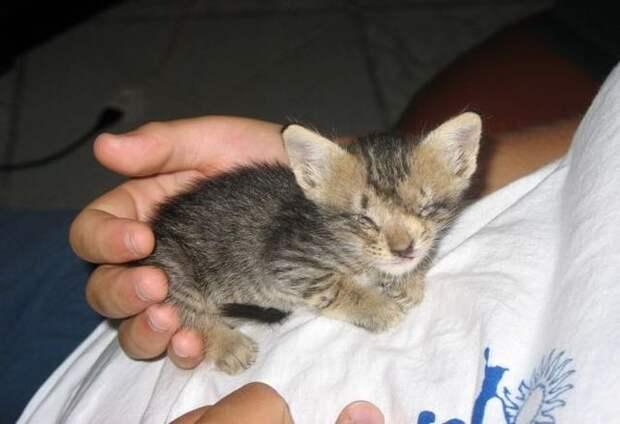 Мужчина спас слепого котенка, не переставая верить в него никогда