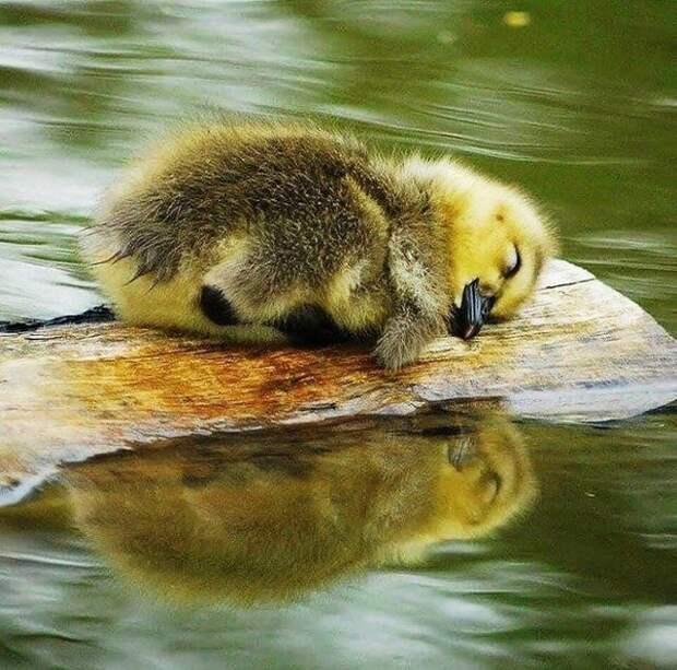 25 самых милых животных, которые сделают ваш день лучше!