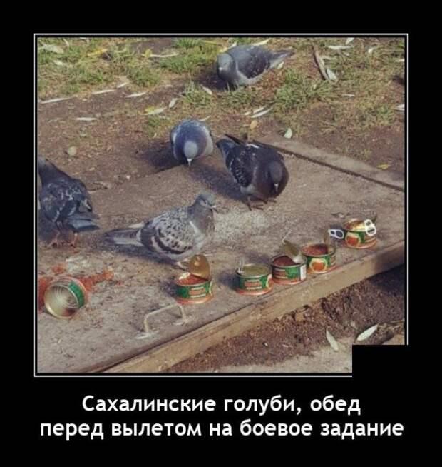 Демотиватор про голубей