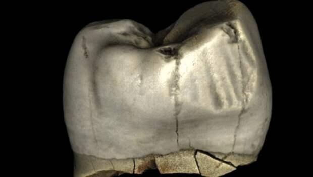 Неандертальцы использовали зубочистки для поддержания гигиены полости рта