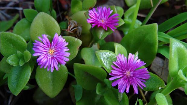 Поможем вам выбрать лучшие суккуленты для дома и сада