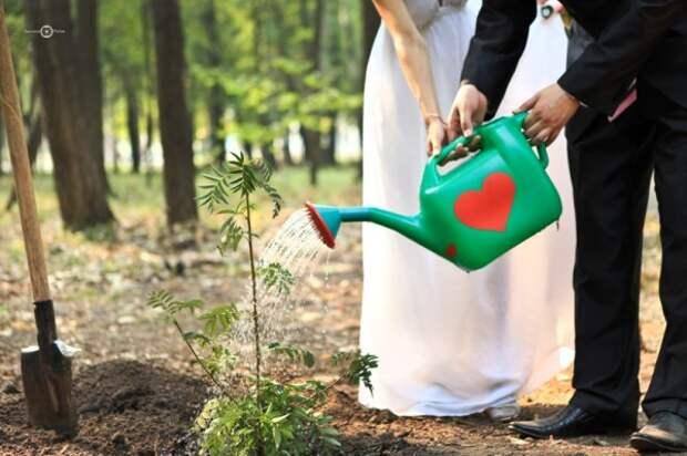 Родить дерево, посадить сына