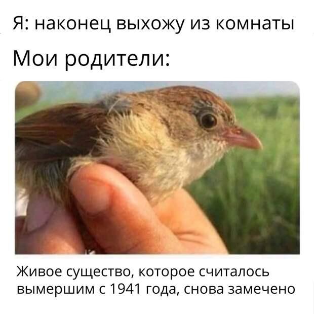 Возможно, это изображение (текст «я: наконец выхожу из комнаты мои родители: живое существо, которое считалось вымершим с 1941 года, снова замечено»)