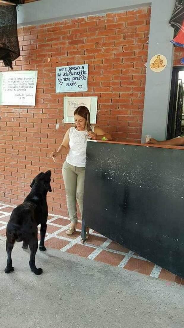 Собака научилась покупать печенье в магазине, наблюдая, как это делают дети