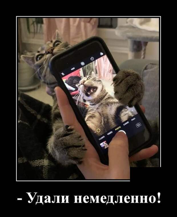 Демотиватор про фото кота