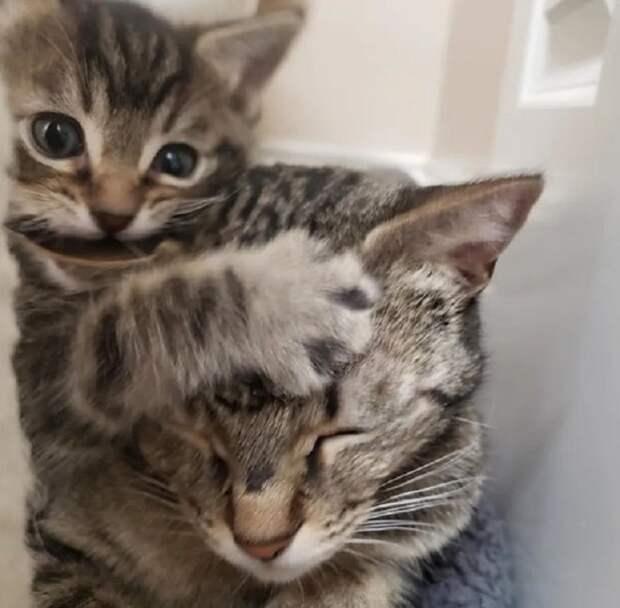 Бездомная кошка-мать позволяет котёнку любые шалости, ведь он остался единственным выжившим малышом