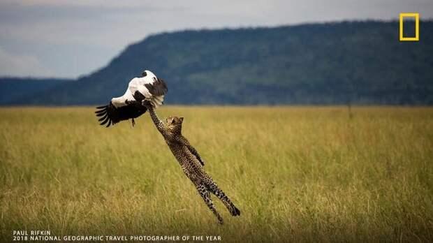 Paul Rifkin / National Geographic