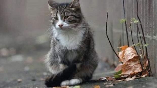 Преданный кот ждал неподвижно свою хозяйку, которая попала в больницу