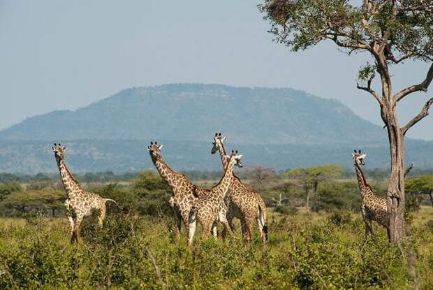 Селус, Африка путешествия, факты, фото