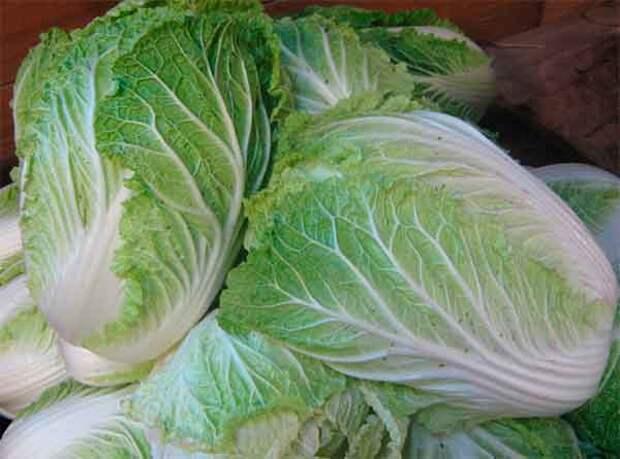 Чем полезна пекинская капуста и как ее правильно готовить