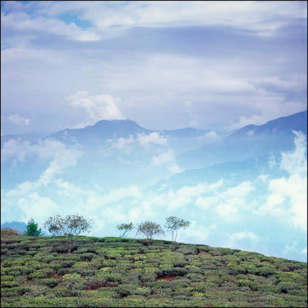 Чайные плантации выше облаков, а на горизонте виден городок Калимпонг, где можно найти дом-музей семьи Рерихов.
