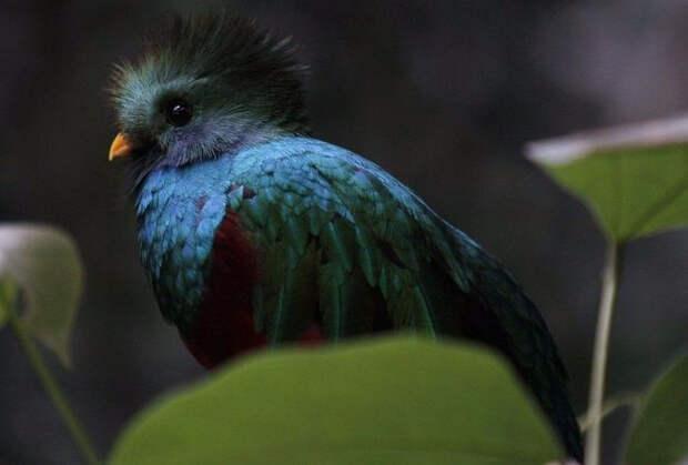 Birds_1 (700x474, 177Kb)