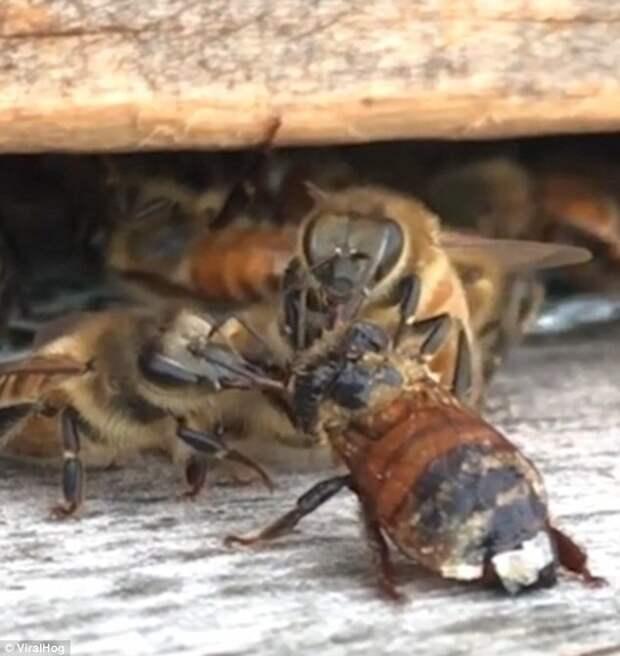 Отчистили до блеска! Теперь можно снова летать и собирать цветочный нектар взаимовыручка, живая природа, насекомые, пасека, помощь, пчела, пчёлы, улей