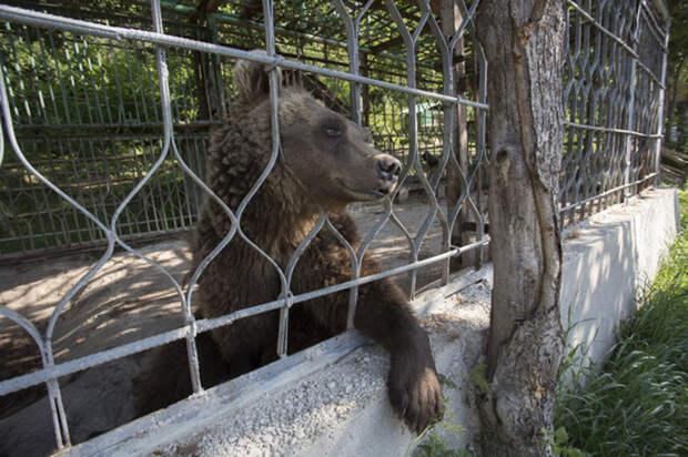 Условия жизни у медведей были просто чудовищными.