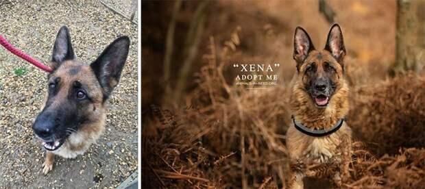 7. Зена животные, помощь, портрет, приют, собака, фотограф, хозяин