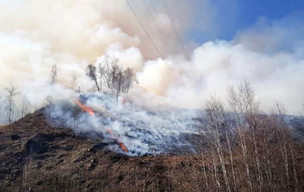 Владивосток заволокло дымом от природных пожаров