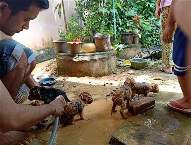 Юноша спас из грязи пять маленьких зверушек, не зная, кто это...