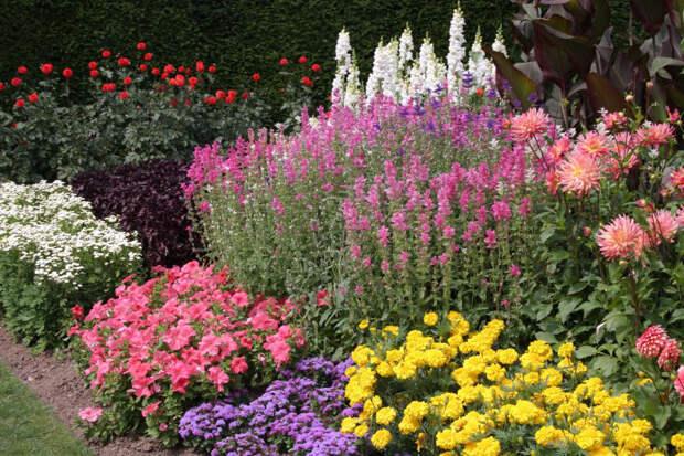 Цветники - Форум для Общения