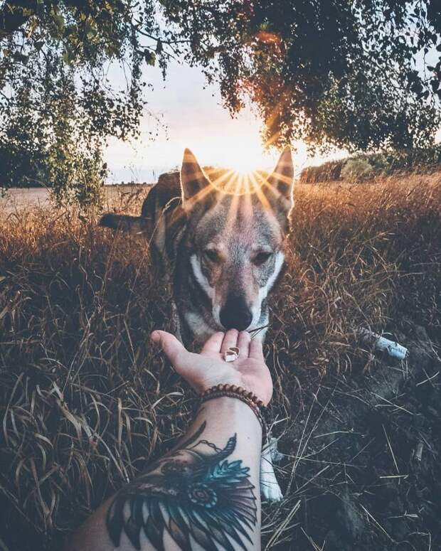 Парень берет свою собаку во все путешествия, и это гораздо круче, чем обычные селфи