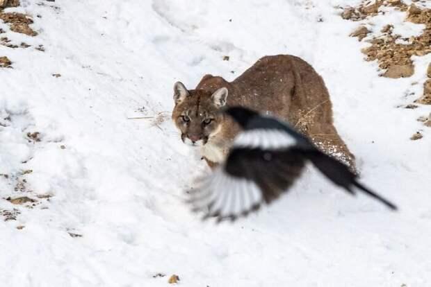 20 фото дикой природы, которые настолько плохи, что даже хороши