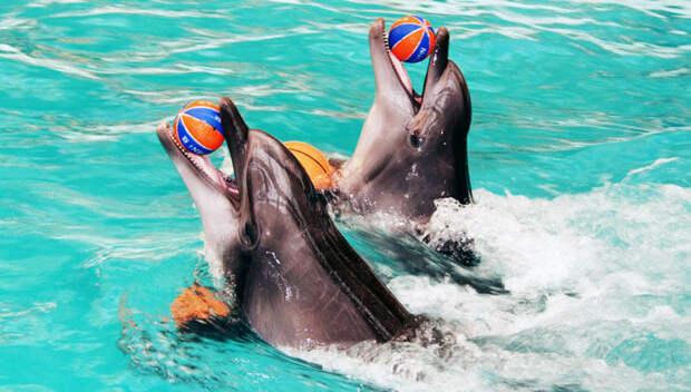 ШОК! Дельфинарий: по ту сторону праздника