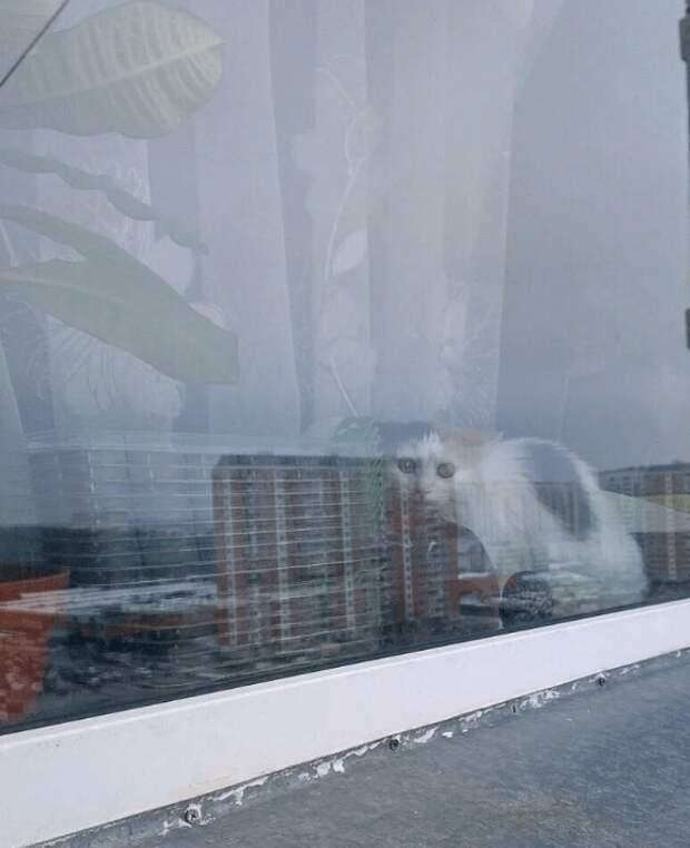 Смешные реакции животных, которые не ожидали увидеть альпиниста по ту сторону окна