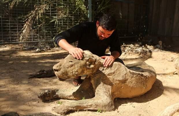 Когда охранники зоопарка вернулись, то увидели страшную картину. 250 зверей превратились в мумии!
