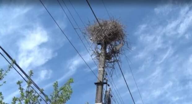 На Закарпатье люди всей деревней спасали самку аиста, партнер которой во время грозы погиб