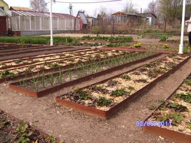 Огород с аккуратными грядками