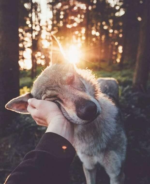 Влюблённые по уши зверята, которые заставят сердце дрогнуть