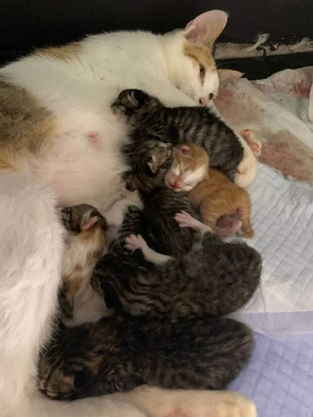 Беременную кошку приютили работники шанхайского офиса