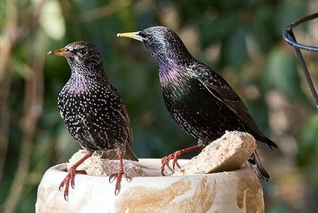 Источник фото: bird4u.mzzhost.com