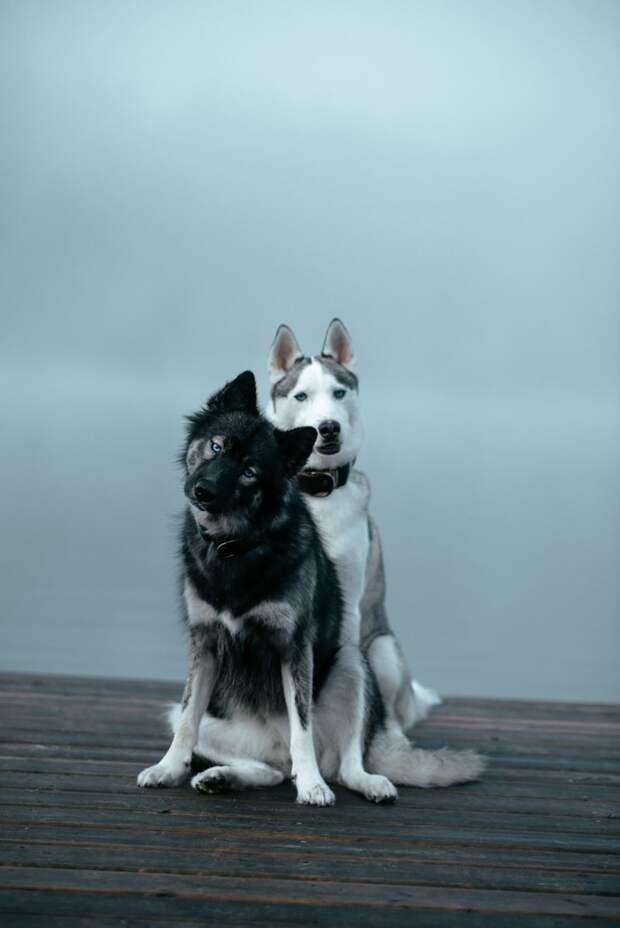 3. Я нравлюсь себе больше, когда я с тобой жизненная позиция, жизнеутверждающие, канада, собаки, философия жизни, фото собак, фотограф, хаски