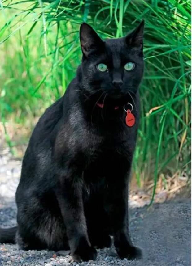 Черный кот привел спасателей к своей хозяйке — иначе бы её никогда не нашли
