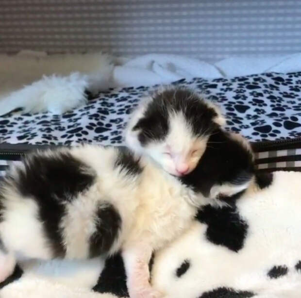 Из-за сильнейшего стресса кошка бросила новорожденных котят и жизнь малюток повисла на волоске