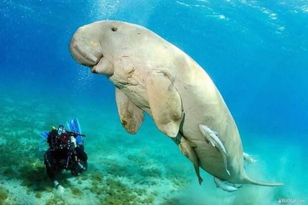 18 фантастических животных, которые живут рядом с нами и могут исчезнуть навсегда