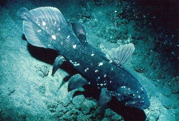 Топ-10 самых редких рыб