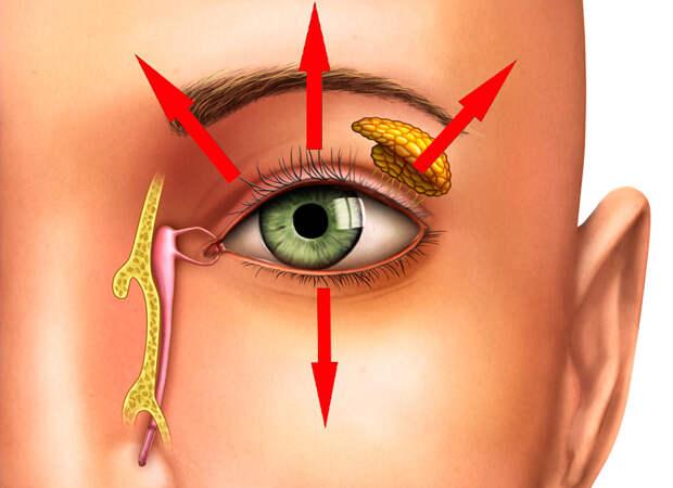 Как открыть запавшие глаза: Укрепляем круговую мышцу глаза за 3 минуты