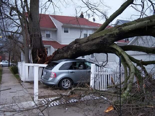 В Москве шквал стал причиной очередного «древопада»